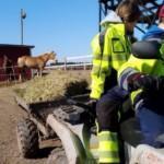Kaksi nuorta ajaa työvaatteissaan mönkijällä, peräkärryssä heinää, takana hevonen